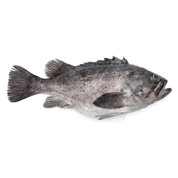 Grouper-Sea-Bass